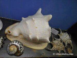 Морські раковини