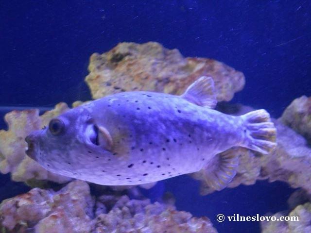 Київський океанаріум рідкісні види риб