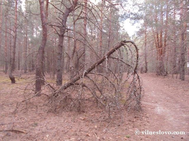 Потенціал лісового господарства