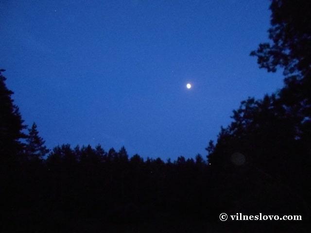 Місяць піднімається над лісом