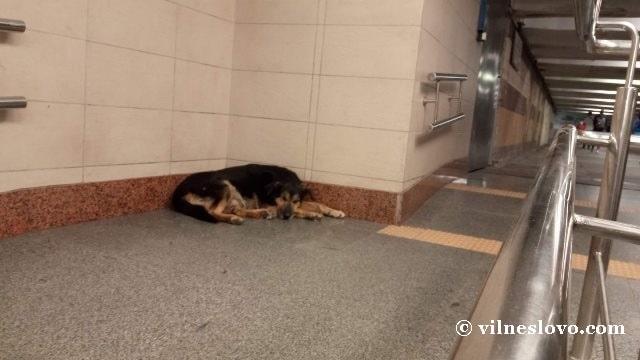 Бродячие животные в метро